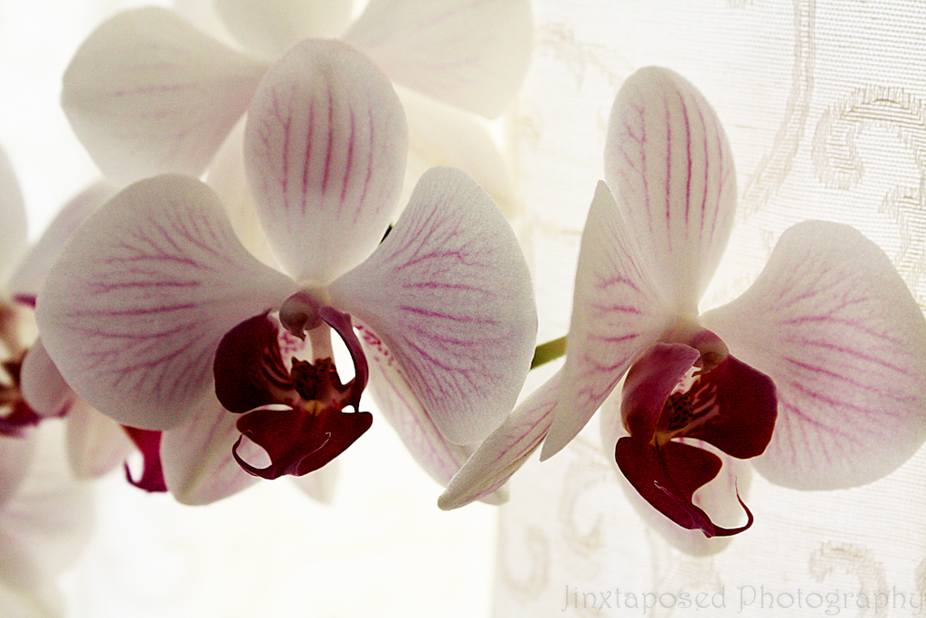 orchid_2-C
