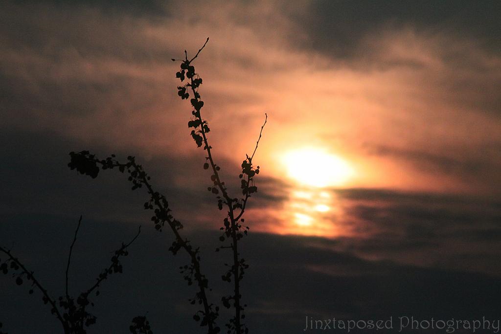 sunset_1-P